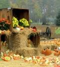 Autumn-Roadside