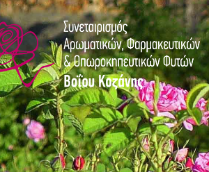 voio_sineterismos